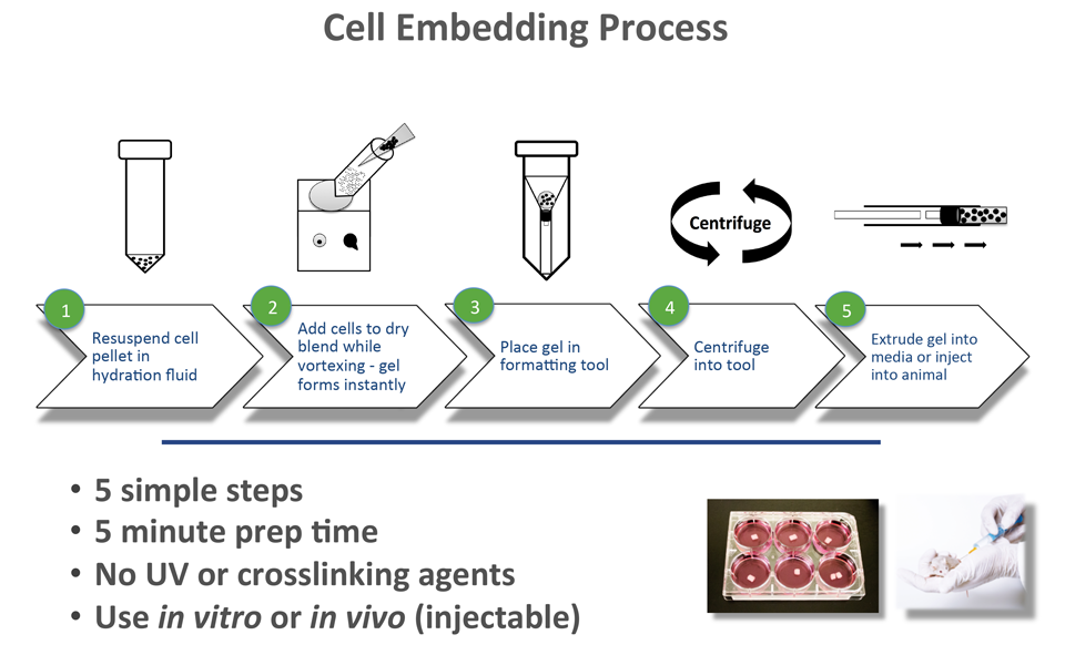 Animal Cell Embedding in Cell Culture Process