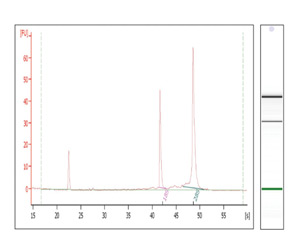 High Quality RNA Using RNA Isolation Kit