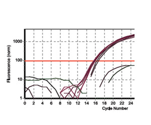 q-RT-PCR Amplification Plot Demonstrating GAPDH expression in RNA Isolation Kit