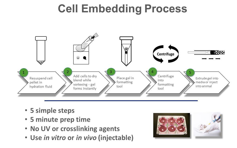 Cell Embedding Process for 3D Cell Culture Matrix