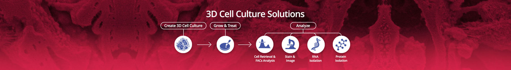 3d Cell Culture Solutions - BRTI Life Sciences